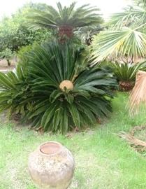 I giardini di ustica visita guidata al villino palme - Palme nane da giardino ...