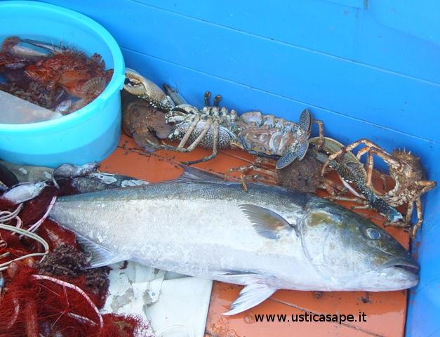 Ottimo pescato – a vista ricciola, cicale…