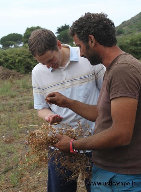Prima lezione sulla produzione delle lenticchie
