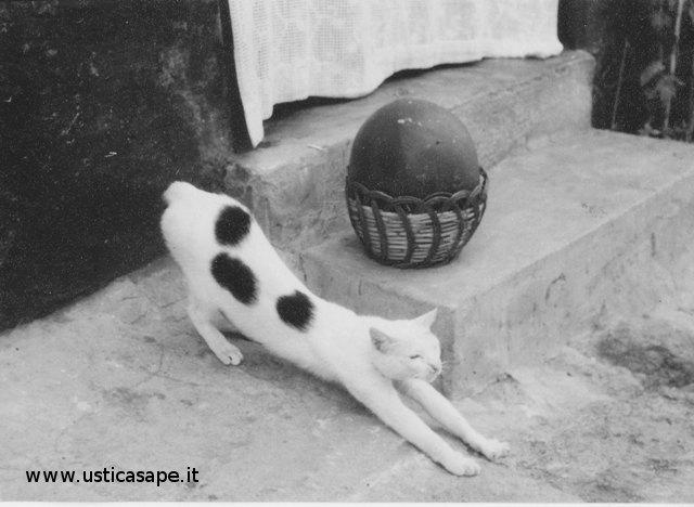 Gatto con Anguria
