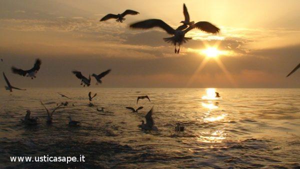 Ustica alba, recupero reti - Gabbiani in cerca di cibo