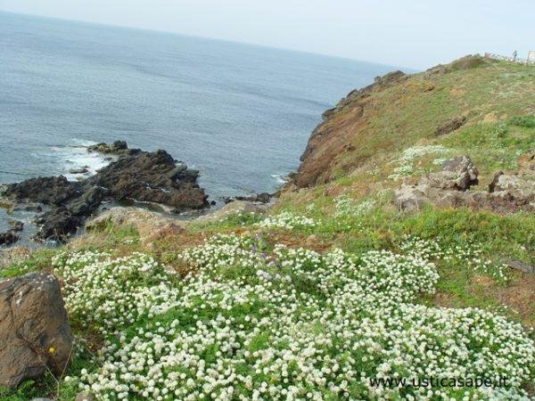 Ustica, fiori spontanei