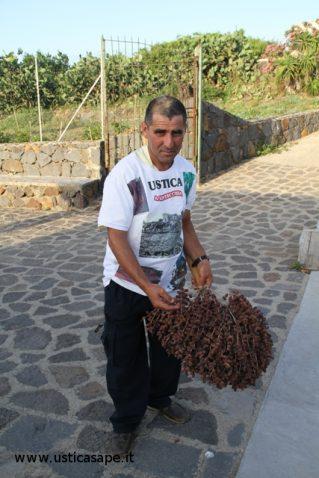 Giovanni Palmisano tenta la riproduzione delle palme uccise dal punteruolo rosso