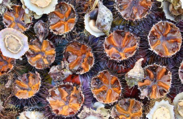 Ricci, patelle e lumaconi di mare
