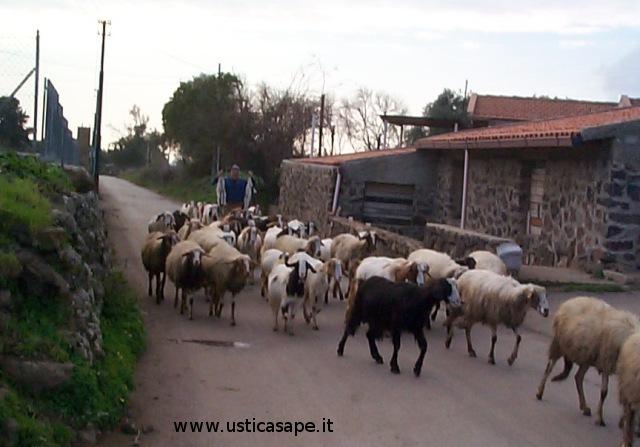 Luciano mostra due pecorelle  appena nate