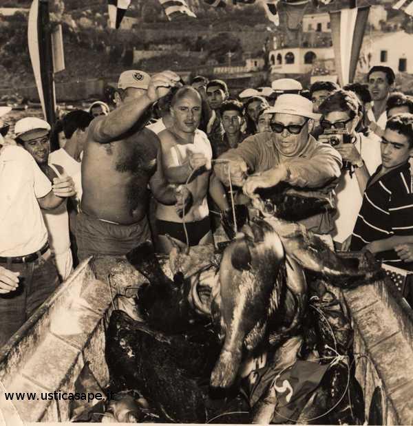 Gara internazionale di pesca subacquea - selezione pesci