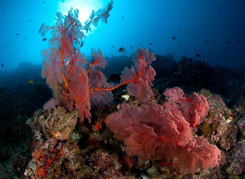 Indonesia Sub_2_098