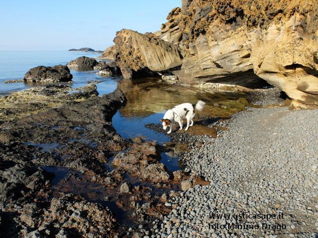 Cane incredulo per la bontà dell'acqua
