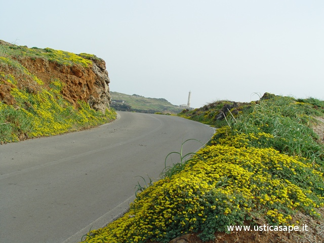 Strada fiorita  con vista Faro Punta Cavazzi