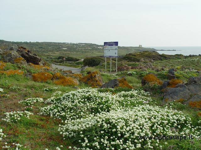 Ustica Spalmatore, fiori spontanei di primavera