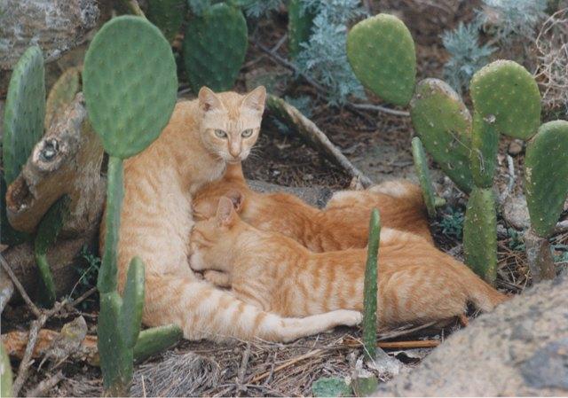 Gattini beati con mamma diffidente