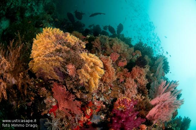 Spettacolari fondali marini