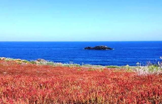 Un tappeto di fiori spontanei in riva al mare