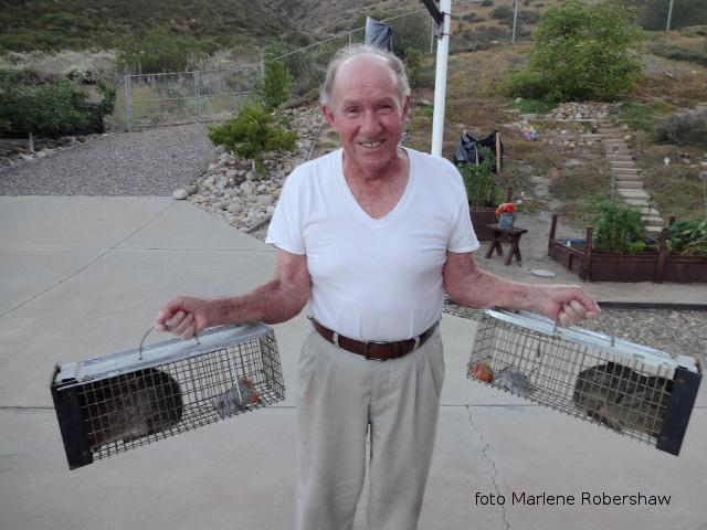 Come Ron Cattura i conigli in California