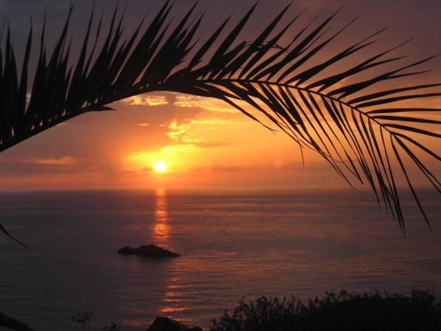 Ustica tramonto con una palma per cornice
