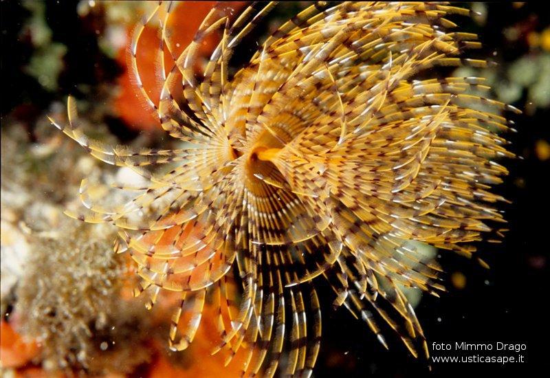 Ustica  foto subacquee