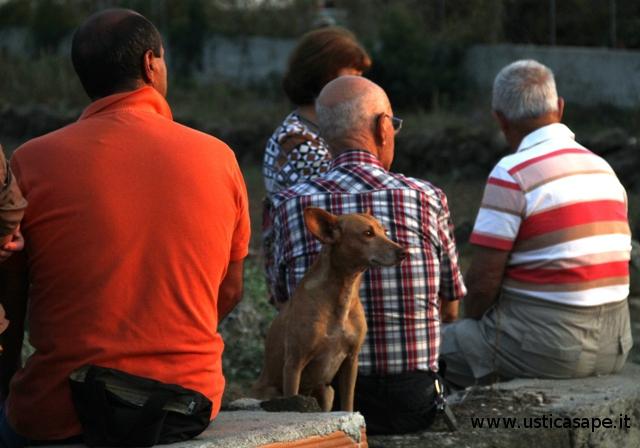 cane guarda spalle