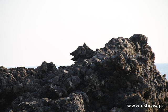Ustica, scogliera del lupo