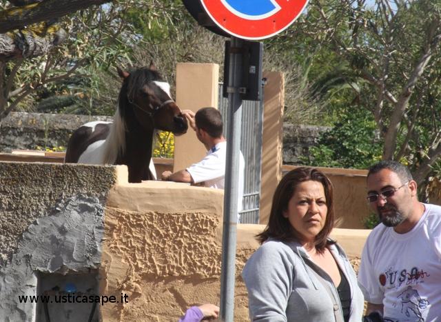 Una carezza al cavallo