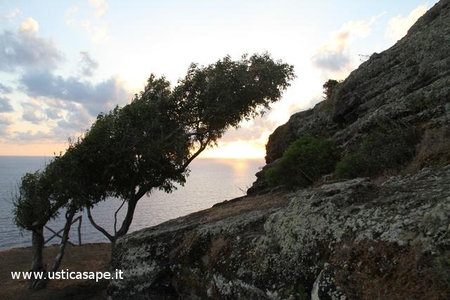 Ustica Falconiera, alberi modellati dalla furia del vento di tramontana