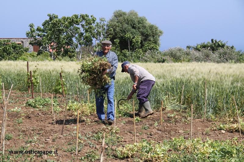 Il pensionato contadino con la falce e l'aiutante
