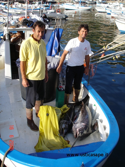 Pesce spada negli ami di pescatori dilettanti