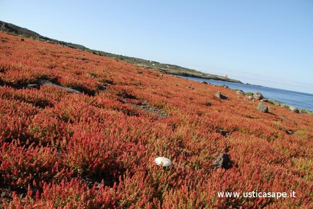 vegetazione spontanea in riva al mare