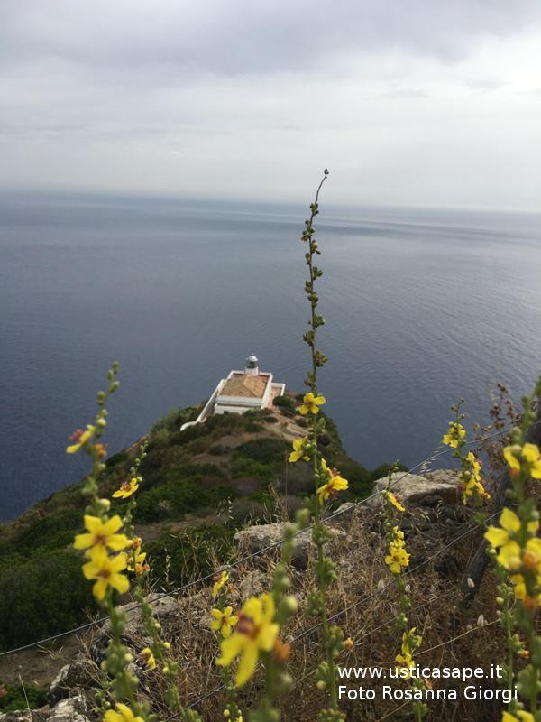 Ustica,  Faro Omo Morto con fiori spontanei