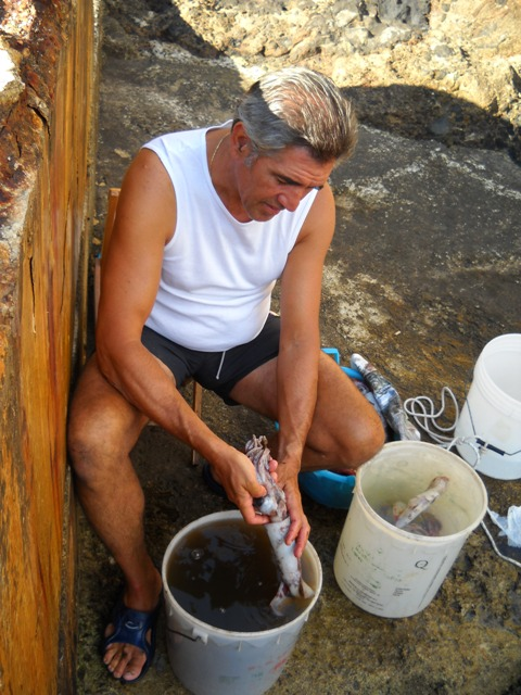 Pulizia totani subito dopo pescati