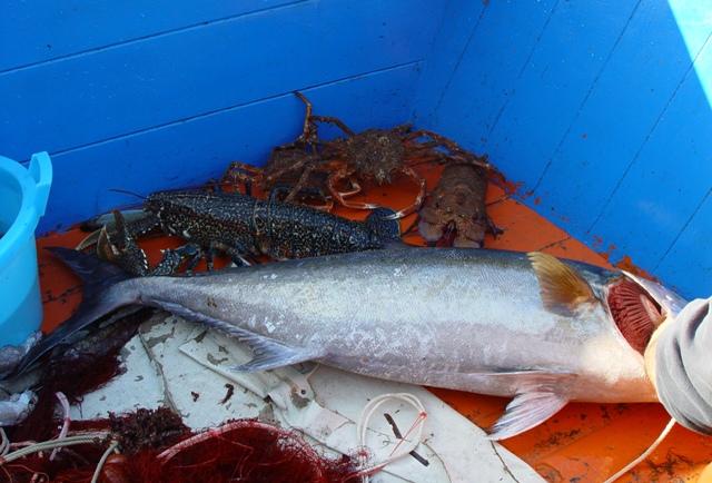 Ustica, buon pescato