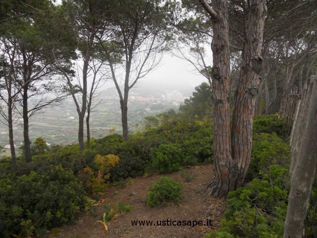 Tra gli alberi del boschetto di Ustica