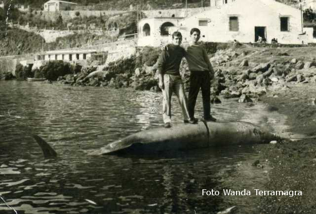 Balena arenata 16-4-1963