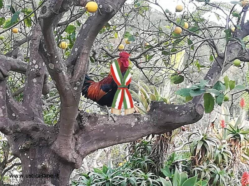 Ad Ustica è stato insignito il primo gallo sindaco di tutti gli uccelli domestici del posto