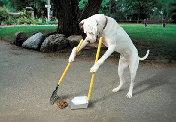 raccogliere, cacca, cane
