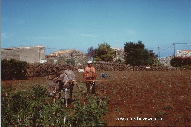 Ustica, Arare terreno con asino