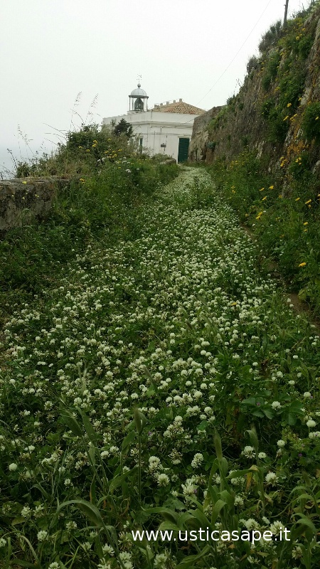 Faro Omo Morto con tappeto di fiori spontanei