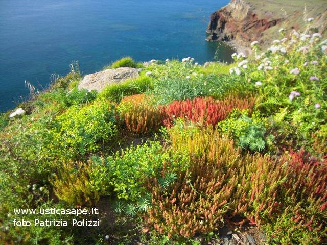 Ustica, vista Cala Giacone con fiori spontanei