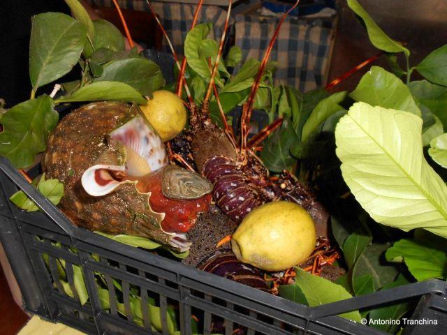 Assortimento di aragoste ed altro per i sughi di Maria Cristina Natale
