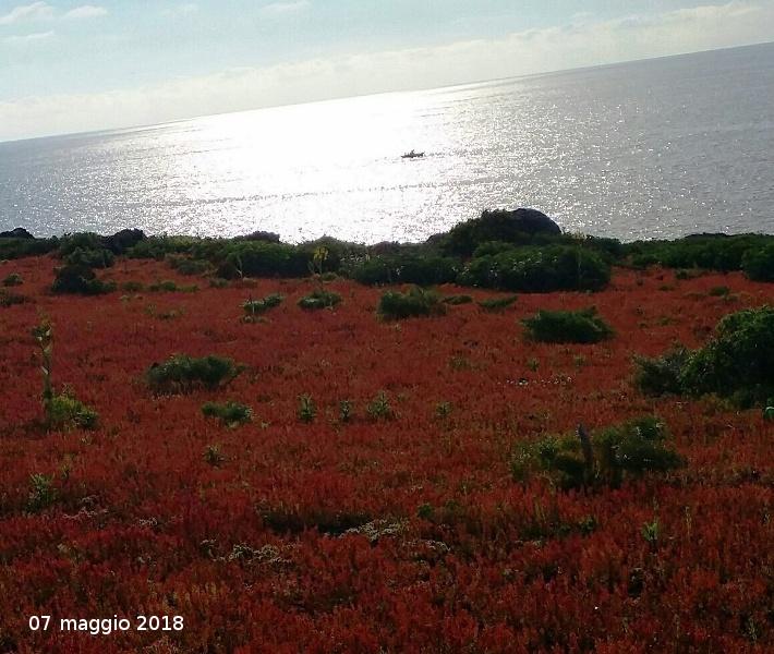 Ustica spalmatore, tappeto di fiori spontanei con peschereccio