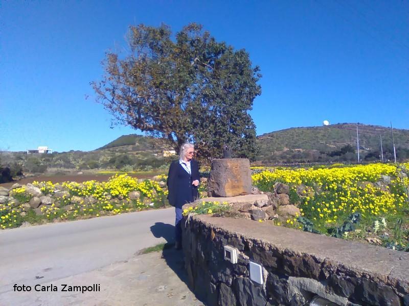 Ustica, strada con fiori spontanei sui muretti