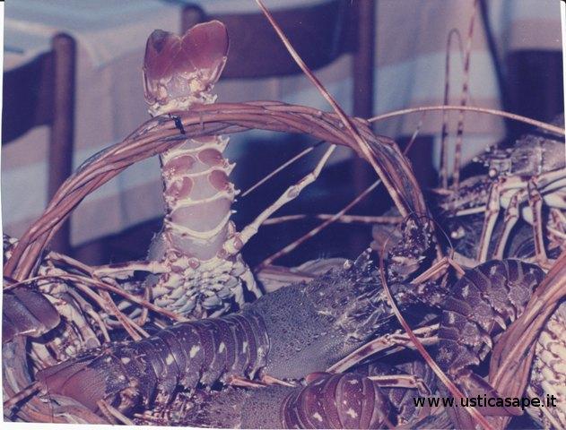 Ustica, cesto di aragoste ancora vive