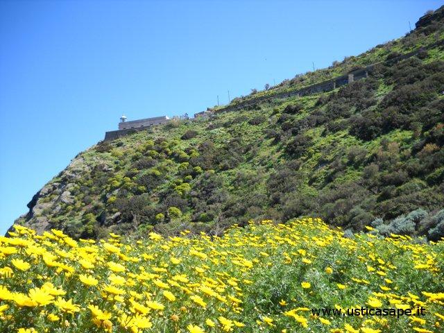 Faro punta Omo morto con fiori spontanei
