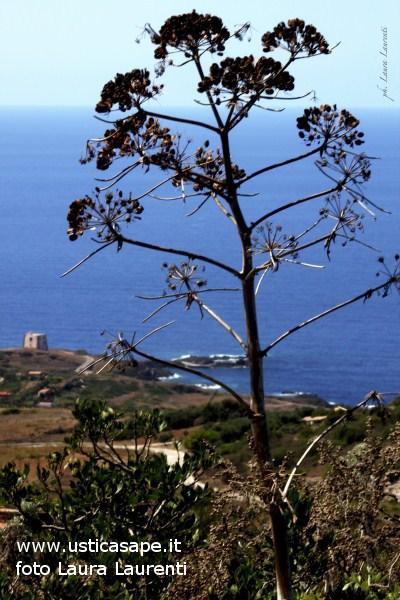 Ustica, contrada Spalmatore Vista dall'alto