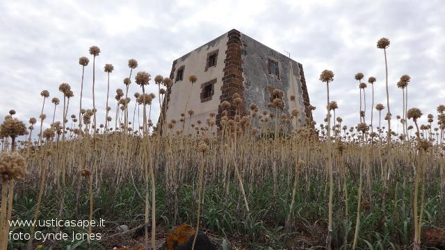 Ustica, torre dello spalmatore tra l'aglio selvatico