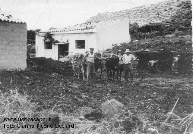 Ustica, antica aratura a con i buoi
