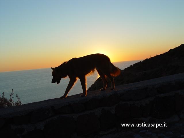 Ustica, tramonto con cane