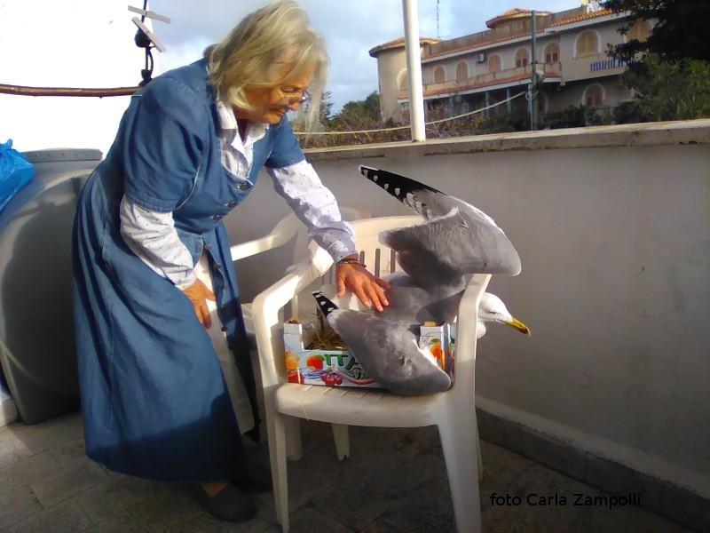 Ustica, primo soccorso ad un gabbiano ferito