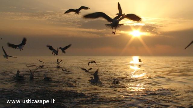 Ustica all'alba il pescatore recupera le reti, gabbiani in cerca di pesciolini