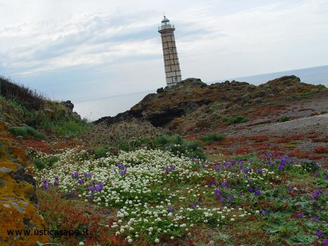 Ustica, Faro con fiori spontanei