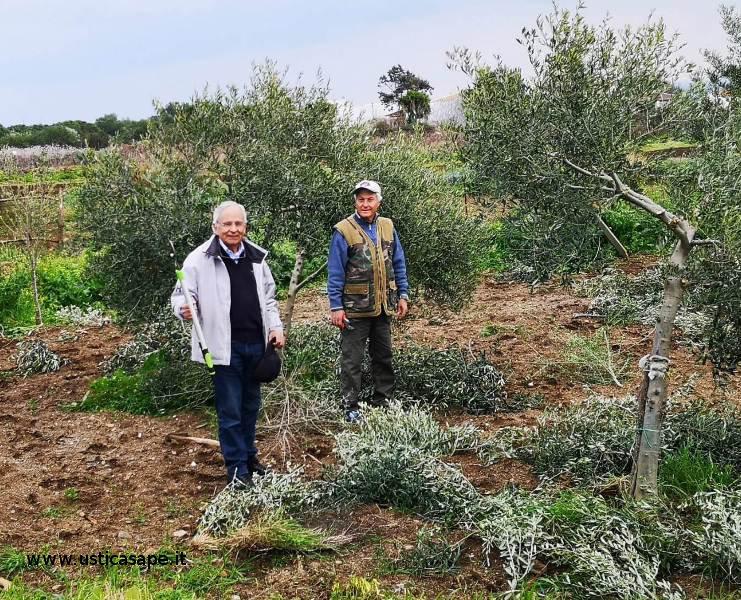 Ustica, Istruzioni per potare l'olivo fai da te